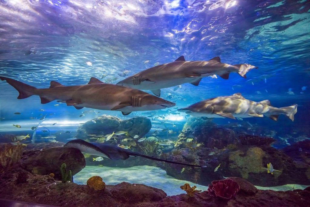 Dangerous Lagoon - Sharks Ripley's Aquarium of Canada