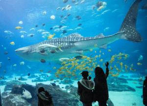 GA Aquarium kids looking at shark