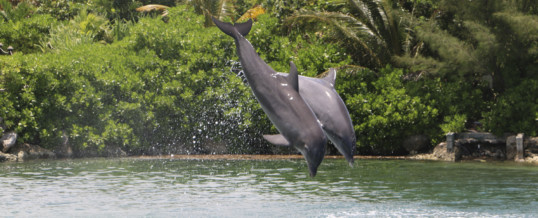 Dolphin Discovery Earns Certifed Autism Center Designation