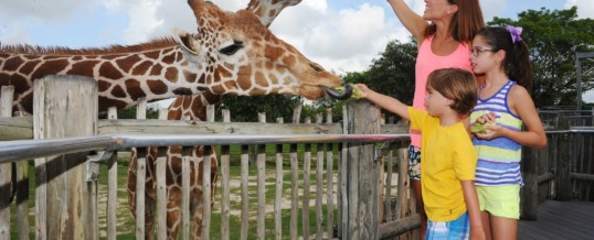 Zoo Miami is First Zoo in Florida to Earn Certified Autism Center Designation