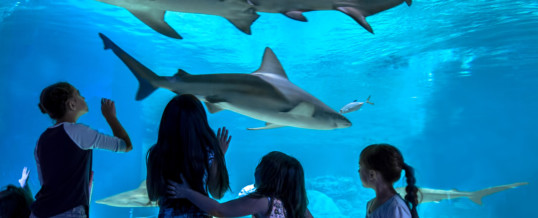 OdySea Aquarium is the First Attraction in Arizona  to become a Certified Autism Center