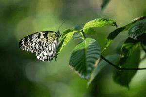 HMNS Butterfly