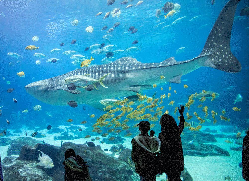 Georgia Aquarium Takes Their Certified Autism Center ...