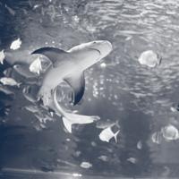 aquarium subeader