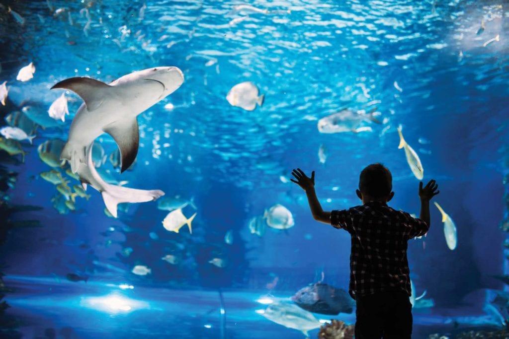 boy at Aquarium