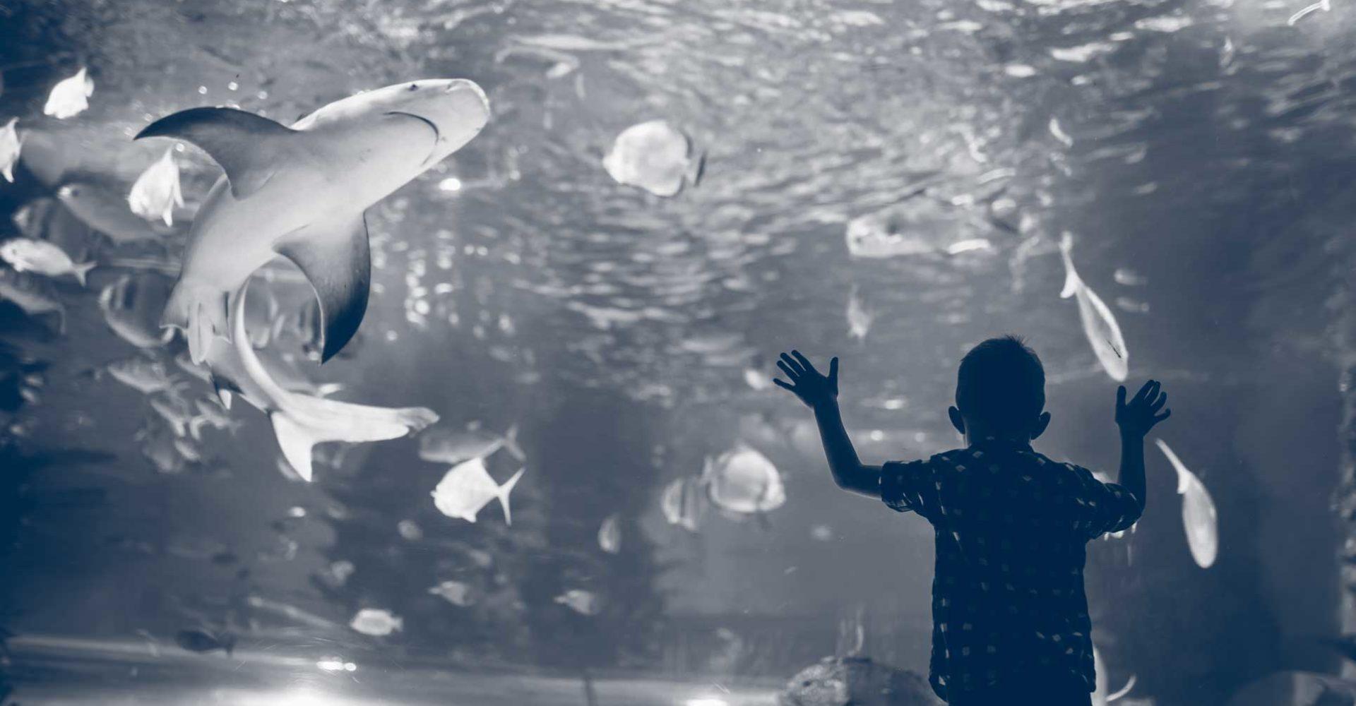 aquarium_duo1928x1285