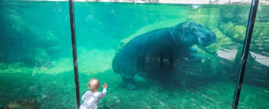 Fort Worth Zoo Becomes First Zoo in Texas to Earn Certified Autism Center™ Designation
